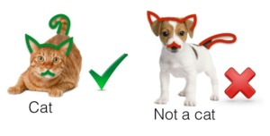 cat-classification